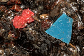 Plastic Samples from the River Mersey in UK