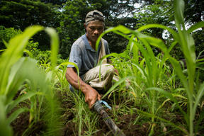 Farmer in Ecological Farm at IIRR in Cavite Province, Philippines