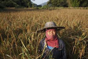 Rice Farmer in Mae Moh in Thailand