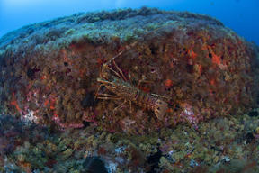 Marine Wildlife at Vema Seamount