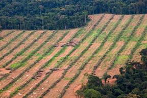Oil Palm Nursery in Cameroon