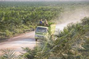 Route through Palm Oil Plantation in Sampit