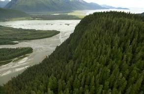 Cape Fox Land Exchange Area in the Tongass National Forest