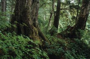 Karst Terrain in the Tongass National Forest