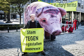 Giant Pig Action against Factory Farming at EU Parliament in Brussels