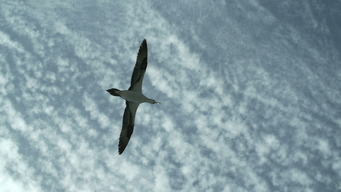 B-ROLL: Seabirds in Transit to Mauritania
