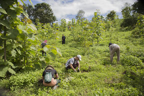 Tree Planting Activity in Chiang Dao, Thailand