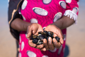Shellfish Collected by Women in Senegal