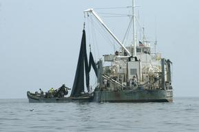 Menhaden Factory Trawler Chesapeake Bay