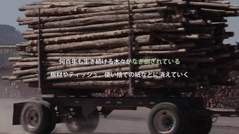 Save the Dvinsky Forest - The Big Picture - Web Video (JAPANESE VERSION)