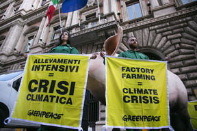 Giant Pig Action against Factory Farming in Italy