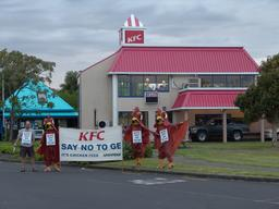 KFC urged to stop GE chicken feed