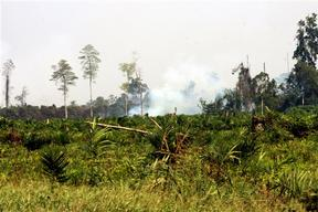 Forest Fires Lit to Clear to the Land of Remaining Timber