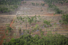 Forest Clearance in Southern Papua