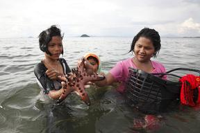 Collecting Shell Fish in Krabi Province in Thailand