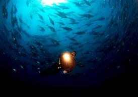 Diving in a Tuna Cage in the Mediterranean Sea