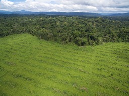 SGSOC Oil Palm Plantations in Cameroon