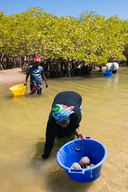 Woman Collects Seafood in Senegal
