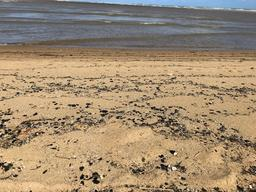 Oil Spill Expedition in Northeast Brazil - Tamandaré Pernambuco Beach