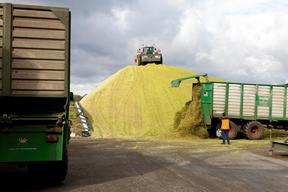 Maize Harvest in Northern Germany