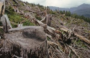 Clearcut in the Tongass National Forest