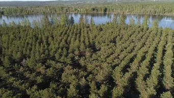 SCA's Tree Nursery in Sweden - Clipreel