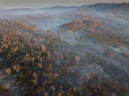 Brazil Rainforest and Destruction