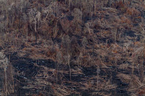 Burnt Peatland Forest in Central Kalimantan