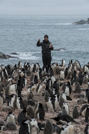 Penguin Survey On Elephant Island