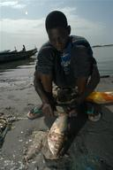 Boy Cleaning Fish in Mauritania