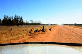 Emus on Outback Road - Drought Documentation Australia