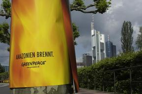 Action against Deforestation in Germany