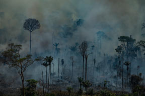 Forest Fires in Novo Progresso, Pará, Amazon (2019)