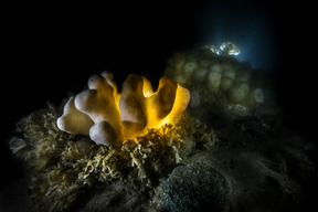 Organisms on Seabed off Sylt in North Sea
