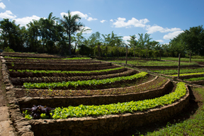 Crops on Finca Marta Farm in Cuba