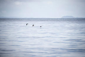 Marine Wildlife near Mull Island in Scotland