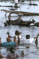 Replanting Mangroves in Ecuador