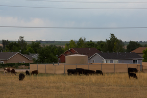 Fracking Storage Tanks on Cattle Ranch in Colorado