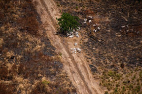 "One Year After the ""Fire Day"" in the Amazon - Bacuri Farm"