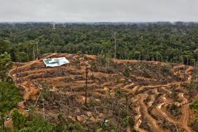 Action at P & G Palm Oil Supplier in Kalimantan