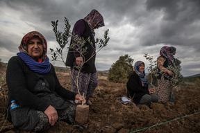 Kolin Illegally Destroys Olive Grove for Coal Expansion in Turkey