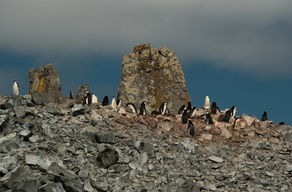 Antarctic Landscapes and Wildlife
