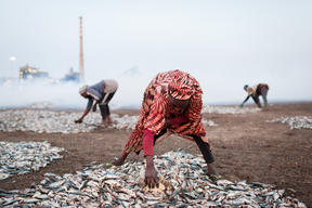 Fatou Samba Smoking Fish in Bargny