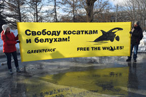 Greenpeace and Friendly NGOs Action for Orcas Rescue in Moscow