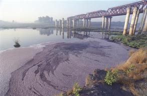 Highly Toxic Industrial Wastewater Released in Vapi